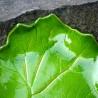 kamelo-ceramika-leaf_15