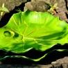 kamelo-ceramika-leaf_17