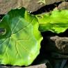 kamelo-ceramika-leaf_18